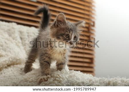 Cute fluffy kitten on white blanket indoors Royalty-Free Stock Photo #1995789947