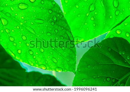 A green leaf with raindrops on it after the rain. Royalty-Free Stock Photo #1996096241