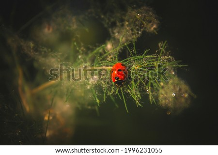 Ladybug on a branch with dew