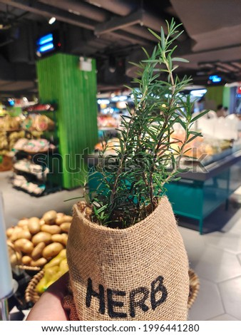 rosemary herb in market, organic plant for used picture herb or  ingredient food
