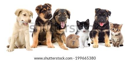 puppies looks #199665380