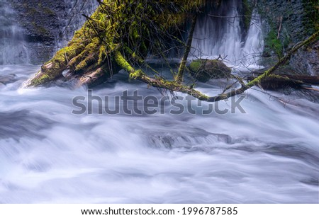 A tree trunk in a stormy river stream. Flowing water. Water stream. Water flow Royalty-Free Stock Photo #1996787585