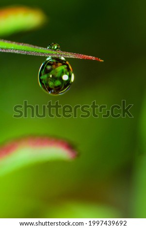 The dew on the grass becomes a very interesting photo object if you take it with a macro lens Royalty-Free Stock Photo #1997439692