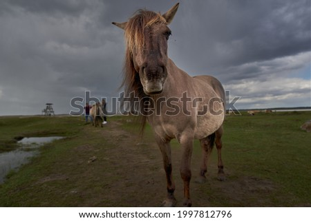 Brown Horse In Field On Rainy Day. High quality photo Royalty-Free Stock Photo #1997812796