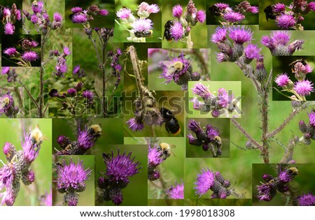 Bumblebee and flower composed of many pictures