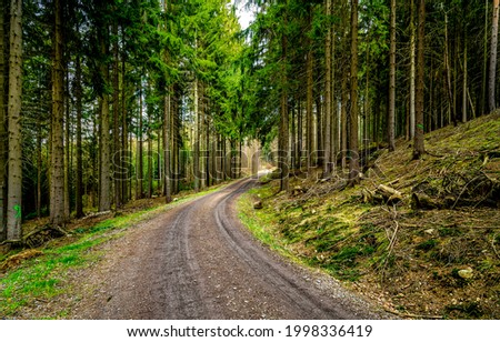 Turn of the road in the forest. Pine forest road. Road in pine forest. Pinewood road landscape Royalty-Free Stock Photo #1998336419