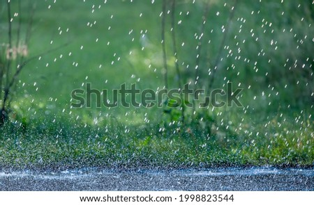 Raindrops fall on the asphalt in the park. Wet asphalt weather song. Royalty-Free Stock Photo #1998823544
