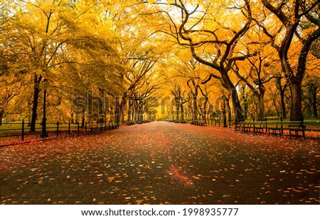 Alley in the autumn city. City park alley in autumn. Autumn city park alley. Alley in autumn fall Royalty-Free Stock Photo #1998935777