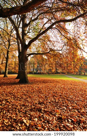 Autumn leaves carpet in the park #199920098