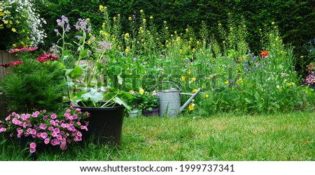 Wild herb and field flowers with iron watering can. English cottage style gardening picture.  Gardening concept of a  rural garden. good for insects like bees en butterflies