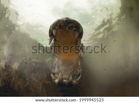 A magnificent picture of a crocodile's wide open mouth with powerful fangs taken in the depths of gray muddy water