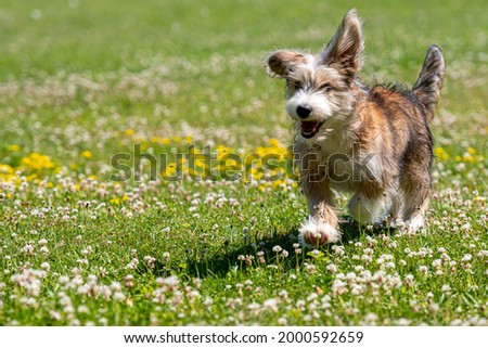 nice mixed breed puppy playing on the lawn on a sunny summer day Royalty-Free Stock Photo #2000592659