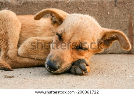 Young stray dog sleeping #200061722