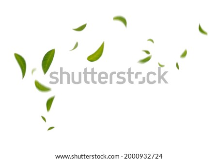 Green Floating Leaves Flying Leaves Green Leaf Dancing,  Air Purifier Atmosphere Simple Main Picture Royalty-Free Stock Photo #2000932724