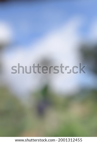 stock photo of high quality nature blur
