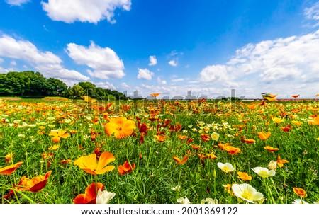 Flower meadow under a clear summer sky. Summer meadow flowers. Meadow flowers in summer time. Summer meadow flowers landscape Royalty-Free Stock Photo #2001369122