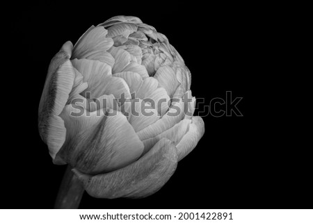 Macro Close Up Flower Photography. High resolution and Full Frame.