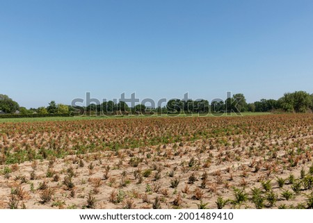 Farmland with green and brown dried crops on the countryside in a rural area Eersel, Brabant, The Netherlnads on a sunny day during summer creating a mindful scenery Royalty-Free Stock Photo #2001489410