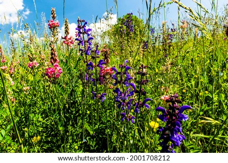 hills and spring flowers with blue sky and white clouds in the Lessinia Natural Park in Vicenza Veneto Italy