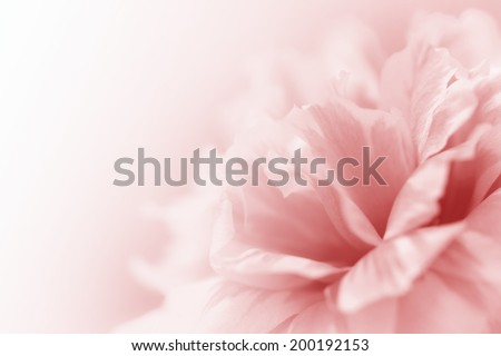 beautiful flowers made with color filters abstract #200192153
