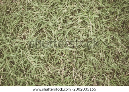Abstract natural background. Collection with different colour tones of green grass, copy space. Summer fresh and football mood. For design wallpaper screensaver web backdrop. Light Pale matte