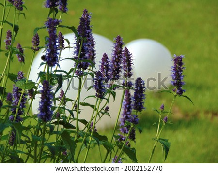macro photo with a decorative background of purple flowers of a herbaceous lavender plant for garden landscape design as a source for prints, posters, decor, interiors, wallpaper, advertising