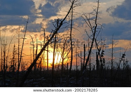 Sunset Through a Fire Devastated Landscape on Alpine Lake in the Boundary Waters in Minnesota Royalty-Free Stock Photo #2002178285