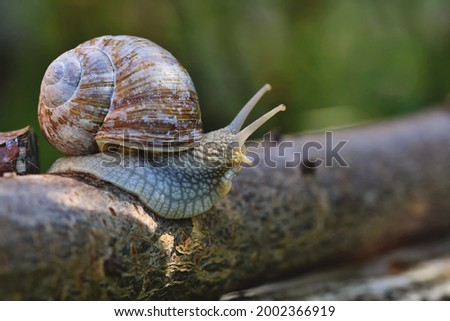 Here's a picture of snail