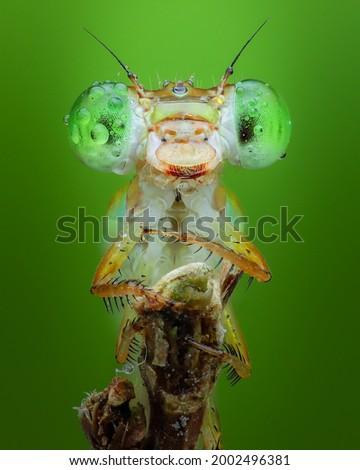 Damselfly close up insect macro photography Royalty-Free Stock Photo #2002496381