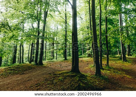 Fairy tail Forest trees. nature green wood sunlight backgrounds