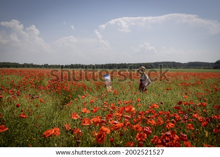 Mature woman artist paints a picture on a poppy field. The artist looks at her work, general plan