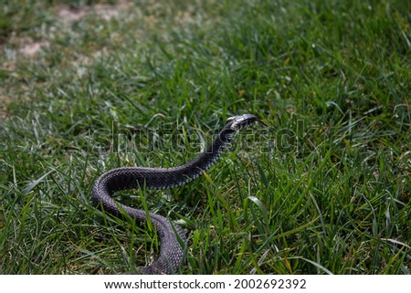 snake crawling on green grass Royalty-Free Stock Photo #2002692392