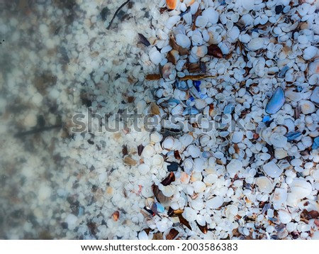 Blur background picture of clam shells above beach sand with extra space for your text