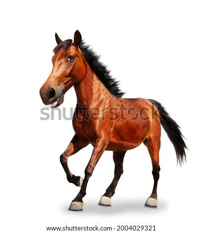 Funny cartoon like image of horse pound a hoof