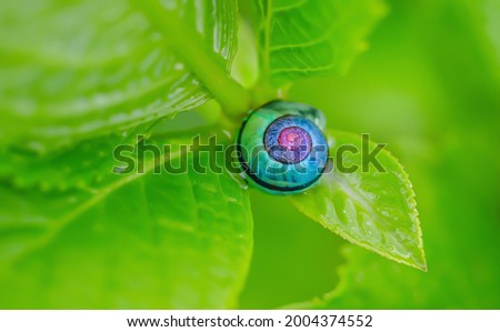 Super Amoled HD Landscape Micro Picture of Blue Color Snail on Green Color Leaf during Daytime.