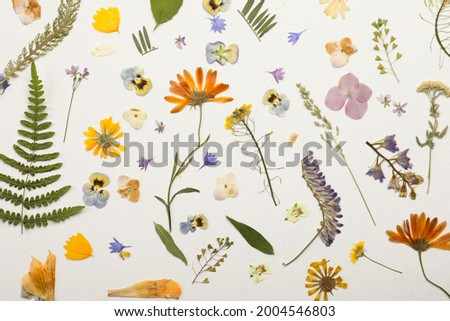 Pressed dried flowers and plants on white background, flat lay. Beautiful herbarium Royalty-Free Stock Photo #2004546803