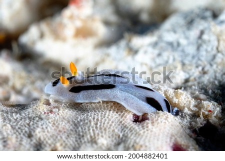 A picture of some beautiful and colored nudibranches