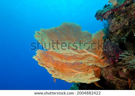 A beautiful picture of an healty coral reef