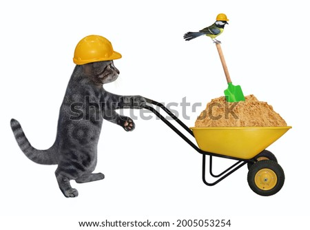 A gray cat builder in a construction helmet pushes a wheel barrow full of sand. White background. Isolated.