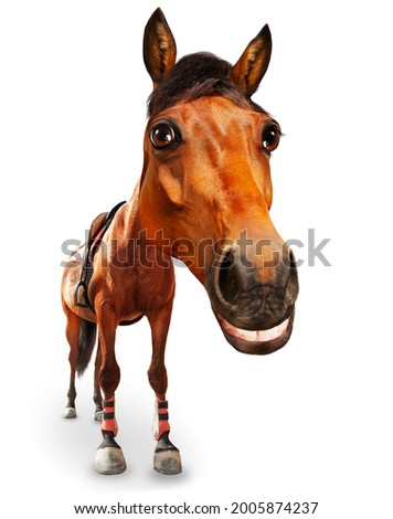 Funny cartoon like image of horse head and big smile isolated on white