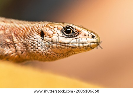 Card with face of brown lizard isolated on the magic pastel yellow background.Macro portrait of lizard in wildlife close up.Funny reptile in natural habitat.Copy space for text.Happy World Animal Day  Royalty-Free Stock Photo #2006106668