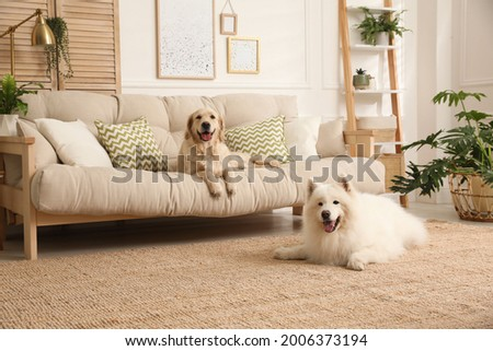 Adorable dogs resting in modern living room Royalty-Free Stock Photo #2006373194