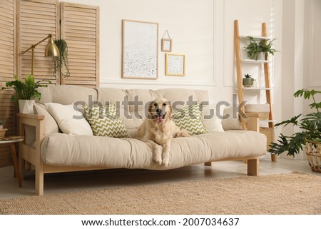 Adorable Golden Retriever dog on sofa in living room Royalty-Free Stock Photo #2007034637