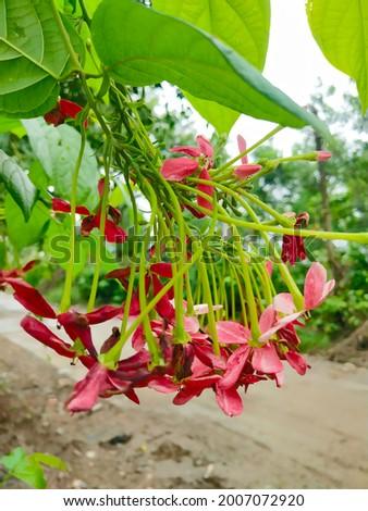 beautiful natural flowers.jpeg superb location