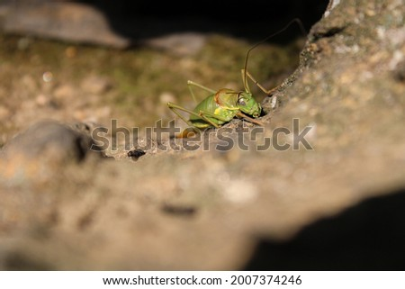 unedited picture of a grasshopp standing on a rock