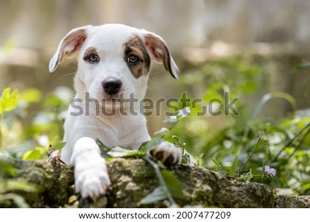 one small mixed breed puppy dog looking at the camera posing on a stem among green plants Royalty-Free Stock Photo #2007477209