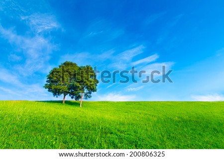 Landscape tree in clear green and blue nature #200806325