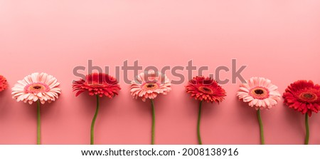 pink and red gerbera daisies in a raw on a pink background. Sequence and symmetry. Minimal design flat lay. Pastel colors