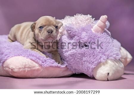 Small French Bulldog dog puppy lying on fluffy violet plush unicorn Royalty-Free Stock Photo #2008197299