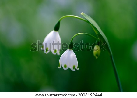 The snowflake flowers are cute. Royalty-Free Stock Photo #2008199444